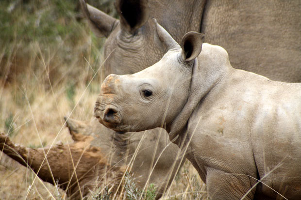 Save African Rhinos